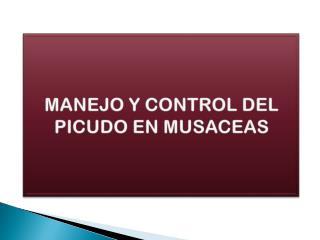 MANEJO Y CONTROL DEL PICUDO EN MUSACEAS