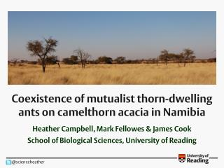 Coexistence of mutualist thorn-dwelling ants on camelthorn acacia in Namibia