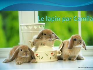 Le  lapin par  Camila