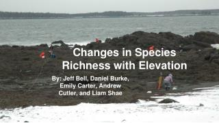Changes in Species Richness with Elevation