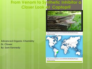 From Venom to Synthetic Inhibitor a Closer  L ook  A t  Captopril