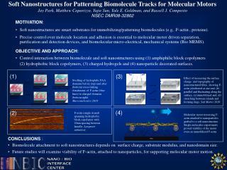 Soft Nanostructures for Patterning  Biomolecule  Tracks for Molecular Motors