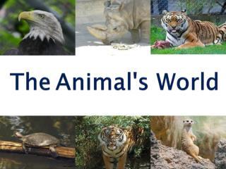 The Animal's World