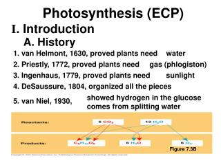 1. van Helmont, 1630, proved plants need