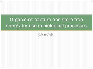 Organisms capture and store free energy for use in biological processes