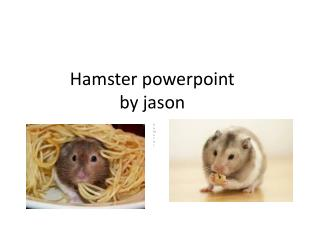 Hamster powerpoint  by  jason
