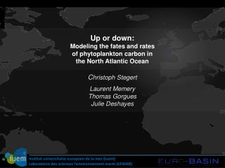 Up or down: Modeling the fates and rates  of phytoplankton carbon in