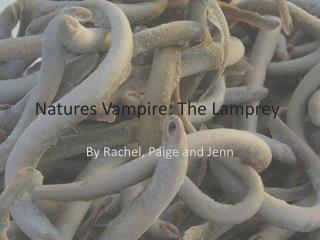 Natures Vampire: The  Lamprey