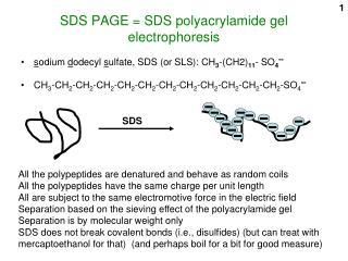 SDS PAGE = SDS polyacrylamide gel electrophoresis