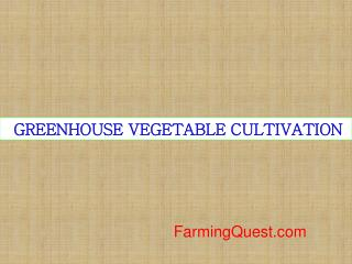GREENHOUSE VEGETABLE CULTIVATION