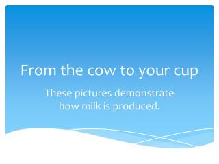 From the cow to your cup