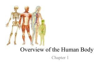 Overview of the Human Body