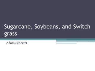 Sugarcane, Soybeans, and Switch grass