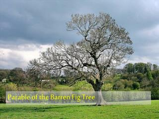 Parable of Barren Fig Tree