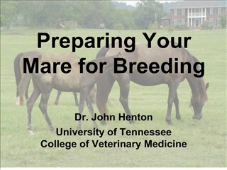Preparing Your Mare for Breeding