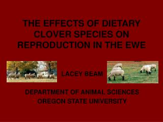 THE EFFECTS OF DIETARY CLOVER SPECIES ON REPRODUCTION IN THE EWE
