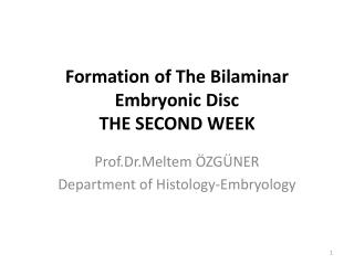 Formation  of  The Bilaminar Embryonic Disc THE SECOND WEEK