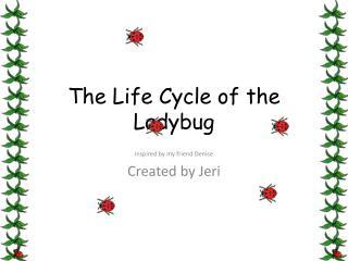 The Life Cycle of the Ladybug