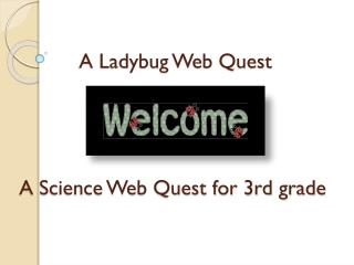 A Ladybug Web Quest  A Science Web Quest for 3rd grade
