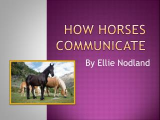 HOW HORSES COMMUNICATE