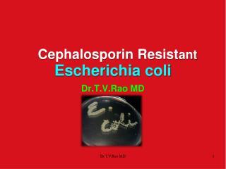 Cephalosporin  Resist ant Escherichia  coli