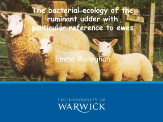 The bacterial ecology of the ruminant udder with particular reference to ewes Emma Monaghan
