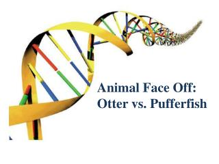 Animal Face Off: Otter vs. Pufferfish