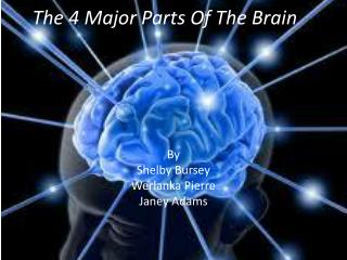 The 4 Major Parts Of The Brain