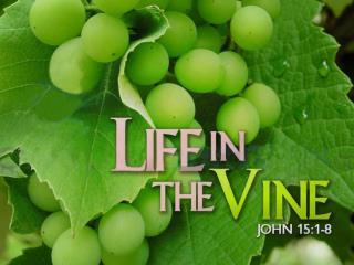 A Disciple: Transformed Laboring