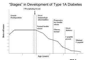 """Stages"" in Development of Type 1A Diabetes"
