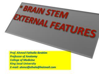 *  BRAIN STEM EXTERNAL FEATURES
