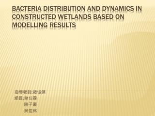 Bacteria distribution  and dynamics  in constructed wetlands based on modelling results