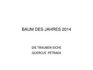BAUM DES JAHRES 2014