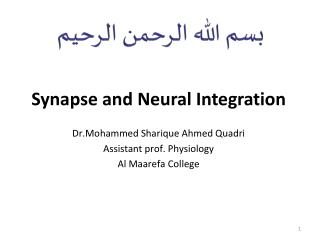 Synapse and  N eural Integration