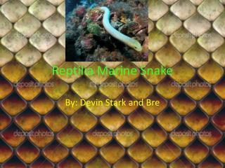 Reptilia  Marine Snake