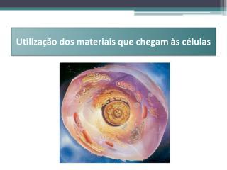 Utilização dos materiais que chegam às células