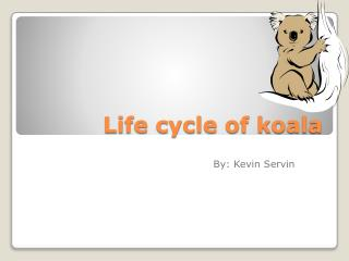 Life cycle of koala