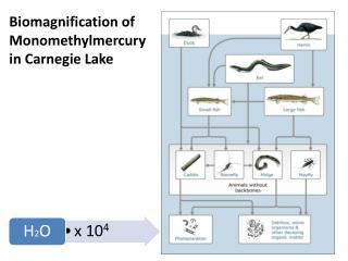 Biomagnification  of  Monomethylmercury in Carnegie Lake