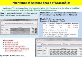 Inheritance of Antenna Shape of Dragonflies