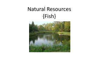 Natural Resources {Fish}