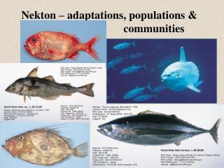 Nekton – adaptations, populations &  communities