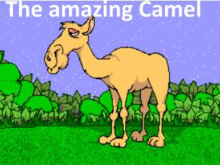 The amazing Camel