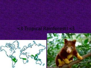 <3 Tropical Rainforest! <3