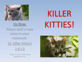 KILLER  KITTIES!