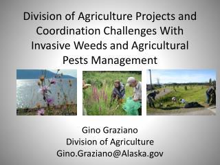 Gino  Graziano Division  of  Agriculture Gino.Graziano@Alaska.gov