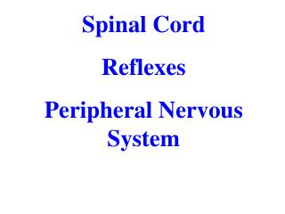 Spinal  Cord Reflexes Peripheral Nervous System