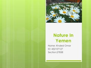 Nature In Yemen