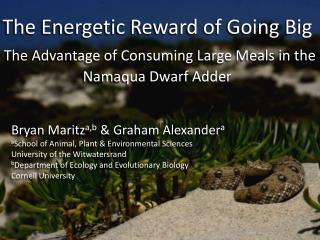 Bryan  Maritz a,b  & Graham  Alexander a a School  of Animal, Plant & Environmental Sciences