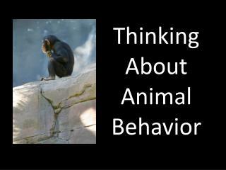 Thinking About Animal Behavior