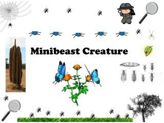 Minibeast  Creature